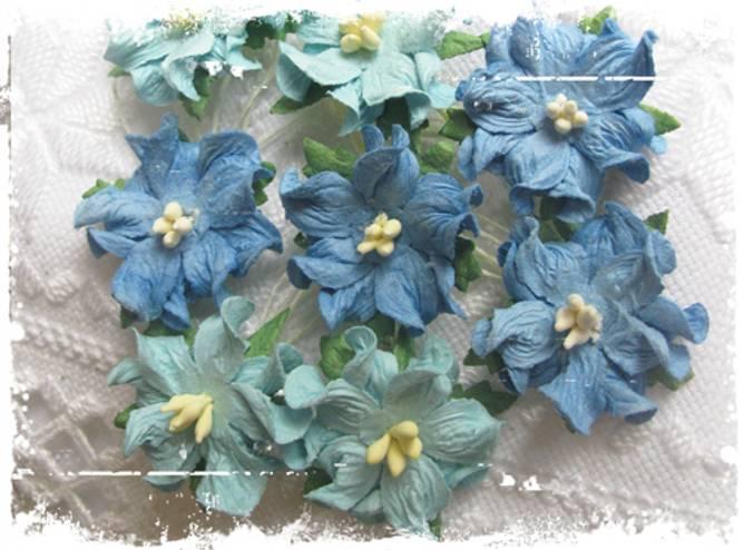 Bilde av Små gardenia, mellomblå (6)