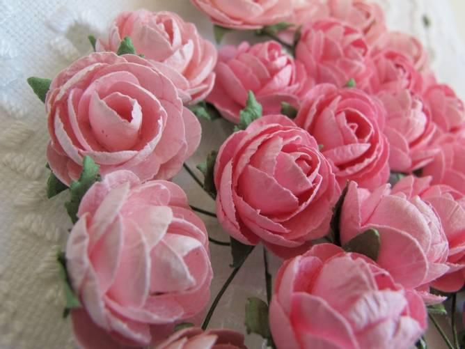 Bilde av Pion, Lys rosa (6)